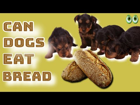 Can dogs eat bread? what types of bread can dogs eat?