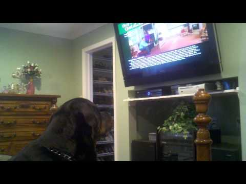 Dear ellen and the today show, just for you...my rottweiler howls at the empire carpet commercial!