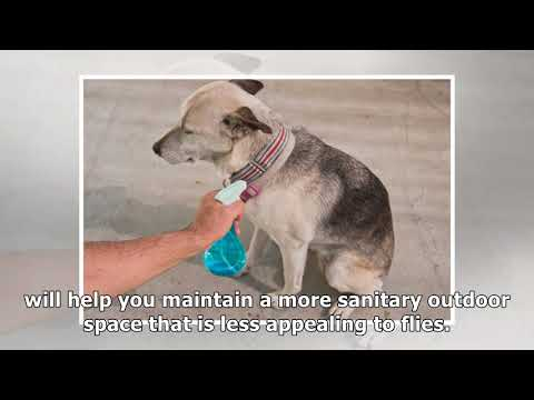 Home remedy to keep flies off dogs
