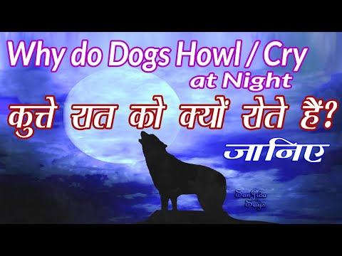 Why dogs cry at night? | why dogs howl at night? | puppies & dogs | कुत्ते रात को क्यों रोते हैं?
