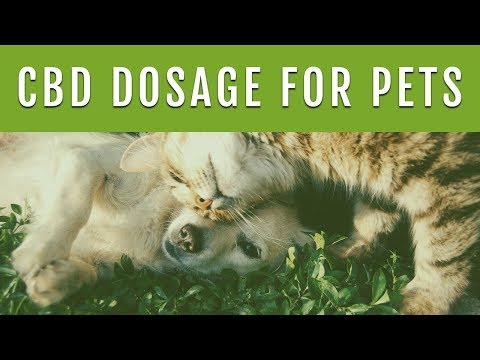 Cbd dosage for dogs - how much cbd oil should i give my dog?