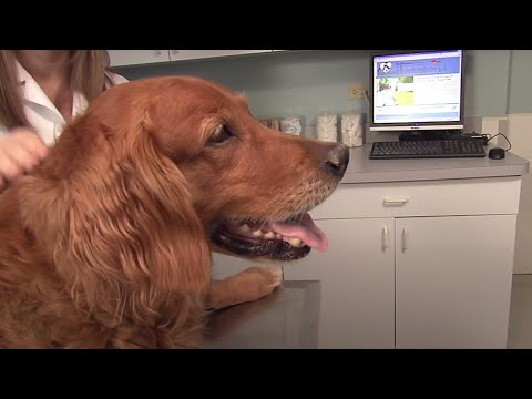 What vaccines do dogs and cats need