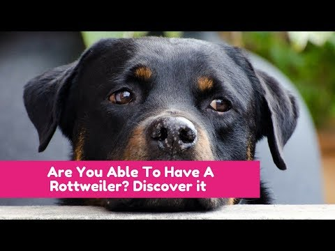 Are you able to have a rottweiler? discover it