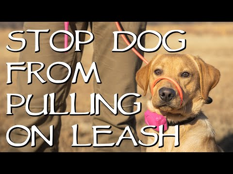 How do i stop my dog from pulling on the leash?