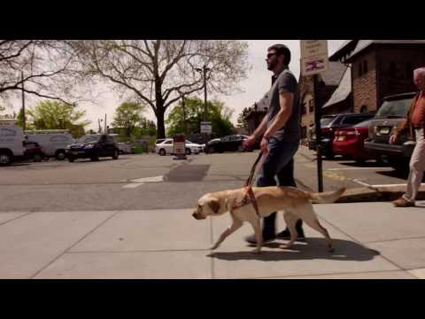 Guide dog at work video