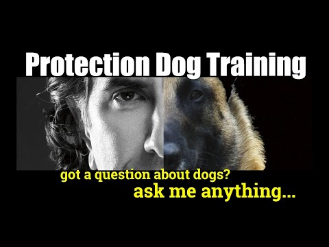 Is there a way to train your own dog for protection - ask me anything - dog training