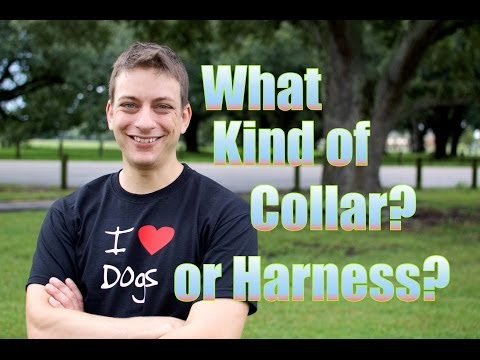 What type of collar should you use when training a dog?