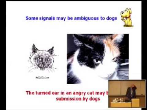 The science behind why cats and dogs dont get along