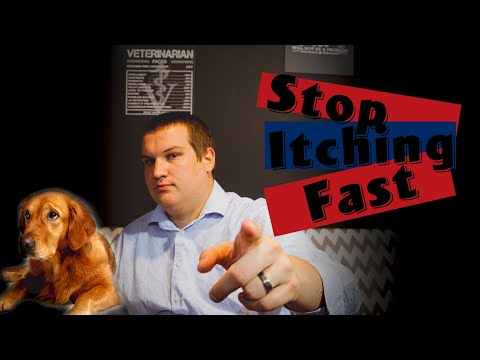 How to stop my dog from itching: top 6 things you need to do|dog allergies|stop itching fast