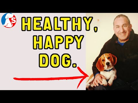 What are my dog's needs to be healthy and happy