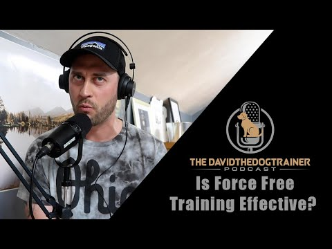 Where is force free training have a place in dog training?