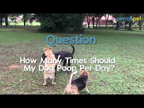 #askperro ep 28 | how many times should my dog poop per day?