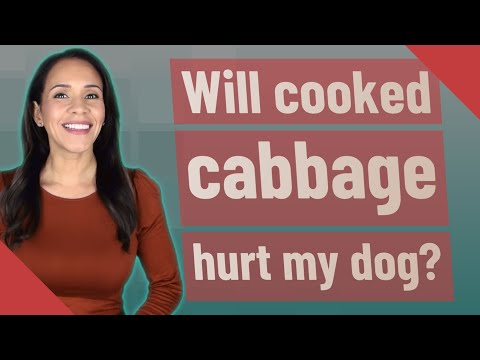Will cooked cabbage hurt my dog?
