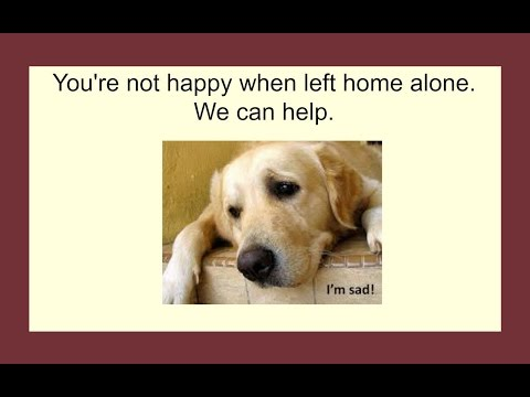 Help my dog has separation anxiety - dog separation anxiety solutions