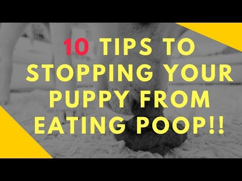 10 tips to stopping your puppy from eating poop