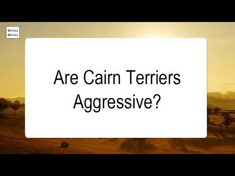 Are cairn terriers aggressive
