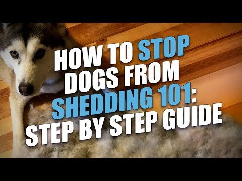 How to stop dogs from shedding (step-by-step guide)