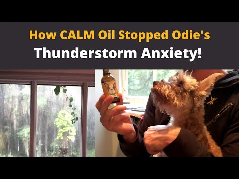 Calm oil for dog anxiety - before and after!