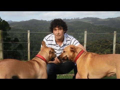 How to train a dog? online dog training tips by professional dog trainer