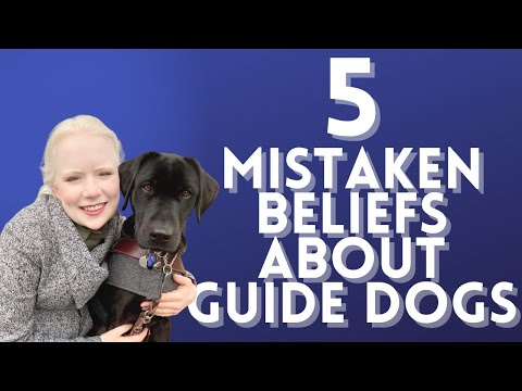Top 5 biggest guide dog misconceptions - what do guide dogs actually do?