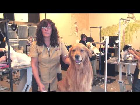 How to treat a dog's bleeding nails : dog grooming