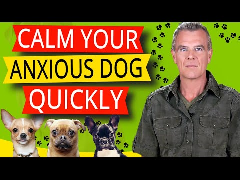 Cbd oil for dog anxiety (how to free your anxious dogs mind)