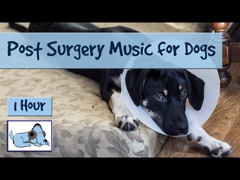 After surgery music for dogs, soothing music for dogs post operation, after neutering or spaying