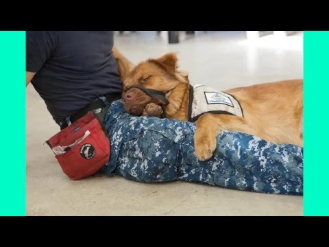 Anxiety and depression service dogs