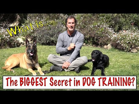 The biggest secret in dog training - what the best dog trainers know - understand your dog