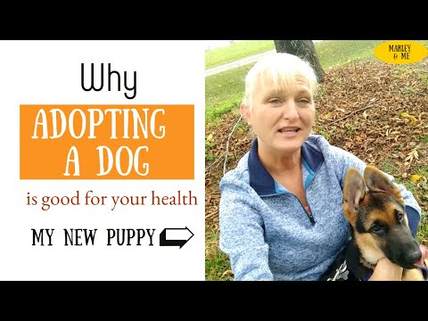 Why dogs are good for your health (marley & me)