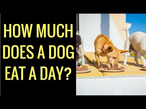 Question: how much does a dog eat a day?