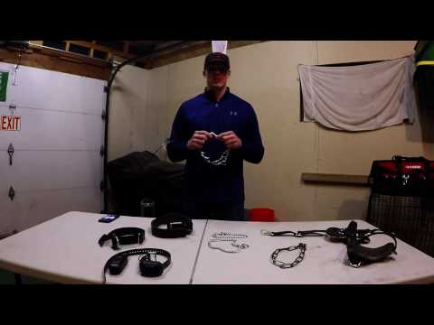 Dog training collars - how to use different types of training collars