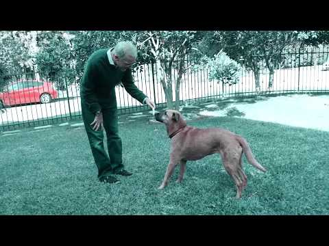 Pet wellness direct - vetsmart: how to quickly relieve your dog's arthritis & joint pain