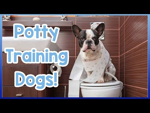 How to toilet train your dog! potty training tips for dogs and puppies!