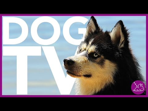 Dog tv - beach walk for dogs - dog entertainment video in 4k