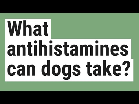 What antihistamines can dogs take?