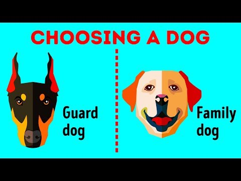 How to choose the perfect dog breed just for you