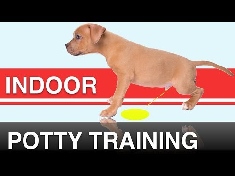 How to indoor potty train your dog with the potty training puppy apartment