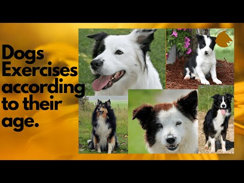 🔥 10 exercises for dogs according to their age 🐶 what exercises does a dog need?