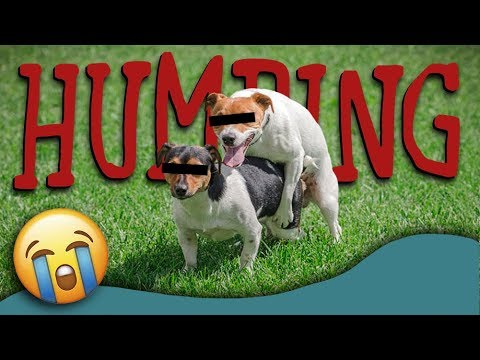 Why do dogs hump? (dog humping explained)   how to stop dog humping