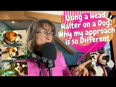 Using a head halter on a dog, why my approach is so different #40