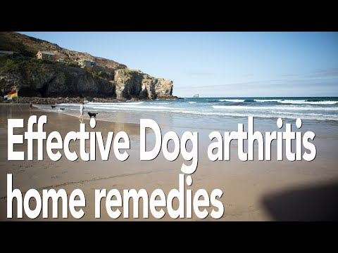 Dog arthritis treatment home remedy   all natural pain relief for dogs   adrian