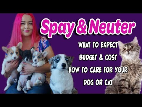 Spay\neuter preparation & recovery for dogs & cats