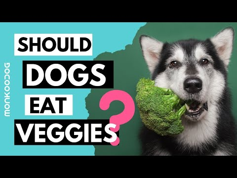 List of vegetables, healthy for your dog l best veggies for your puppy growth l