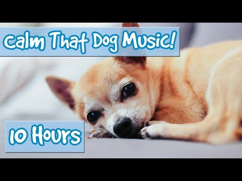 How to make your dog calm down! the best playlist of music to help anxious or upset dogs relax! 🐶