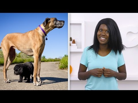 How to clean your dog's teeth without a brush | chewy