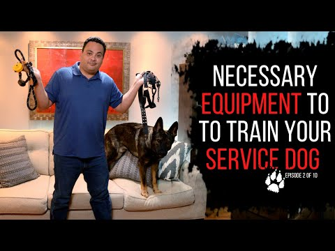 Necessary equipment to train your service dog   service dog training