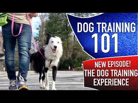 Dog training 101: what an actual, realistic day of training looks like with my dog.
