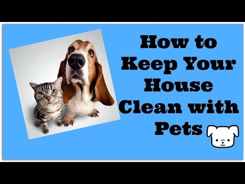 How to keep your house clean with pets: vacuum your dog???
