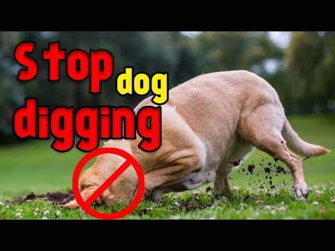 How to stop your dog from digging up unnecessary holes in yard